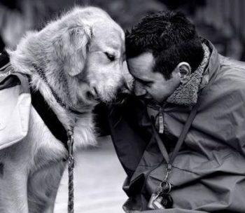 Le soin avec l'animal…